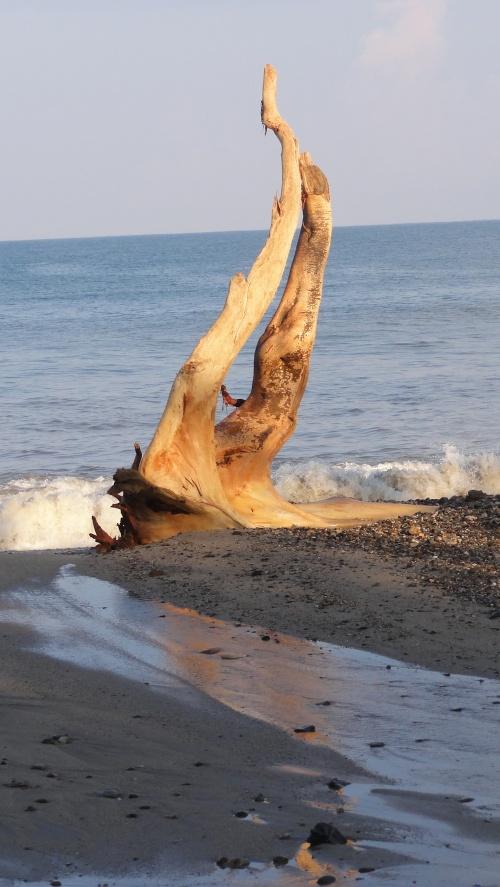 Beach Sculpture at San Pancho, Nayarit