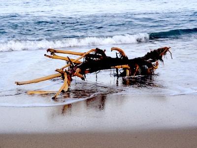 Driftwood on the Beach at San Pancho, Nayarit